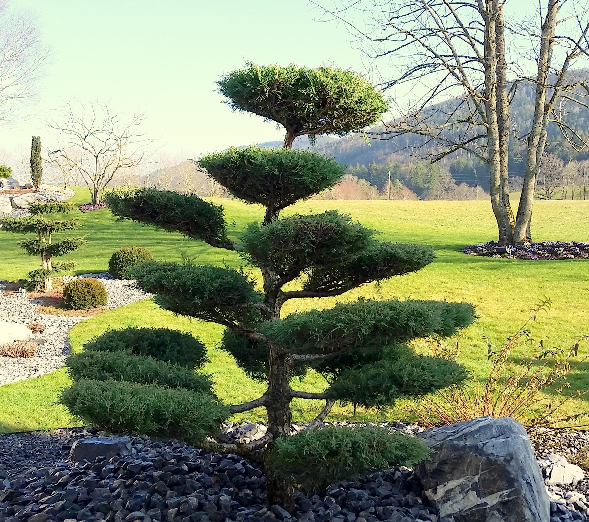 Cr alentours s rl jardinier paysagiste jura for Tarif paysagiste tonte pelouse